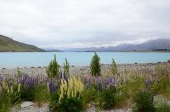 Hotelangebote in Lake Tekapo