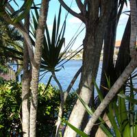 Hideaway Waterfront Resort & Hotel Mature palms