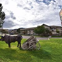 Prospector Hotel and Casino Featured Image